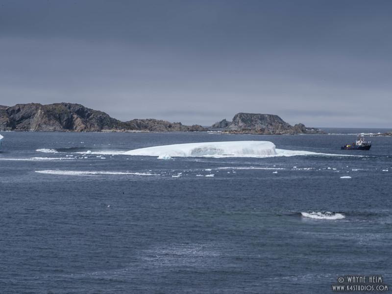 Iceberg 68g    Photography by Wayne Heim