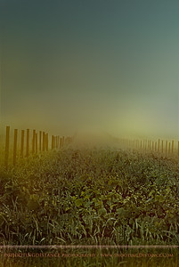 Sun Cuts Through Morning Fog in the Salinas Valley