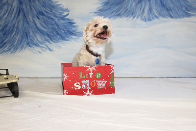 Holiday Pet Photos Nov2 City Lights