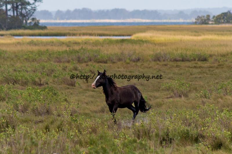2016 Pony Spotting