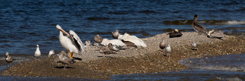 That rookery out on the spit -- another view