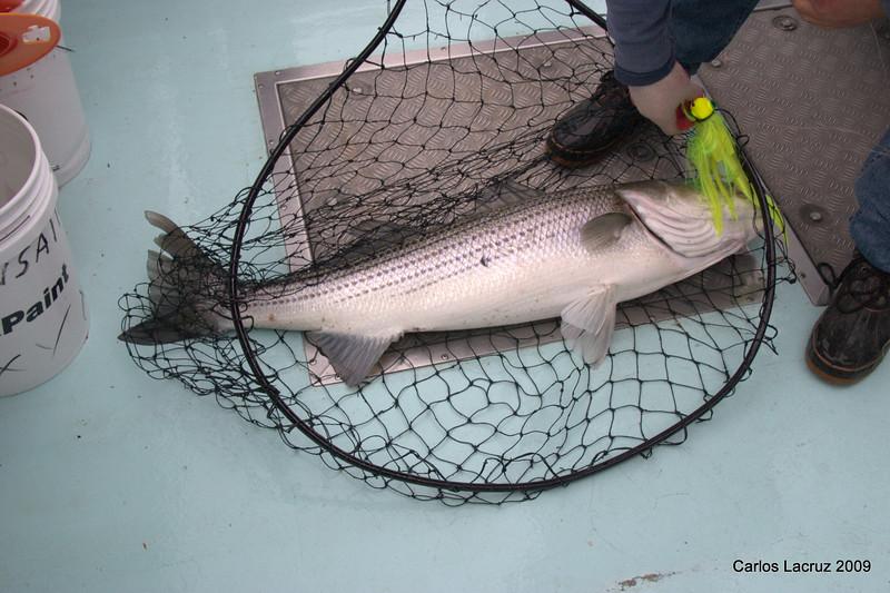 Lorton Fishing Trip-8.jpg