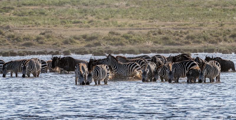 Tanzania_Feb_2018-340.jpg