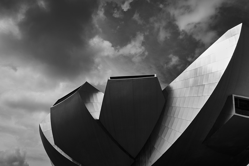Black & White: Urban Jungle