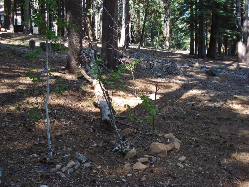 06-06-2015 First Watering Backyard Project (13).JPG