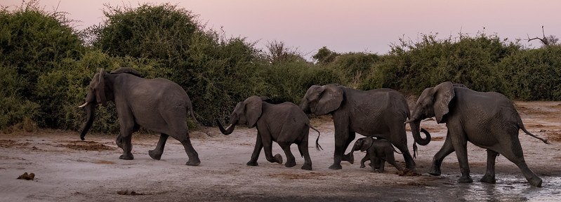 Botswana_June_2017 (4397 of 6179).jpg
