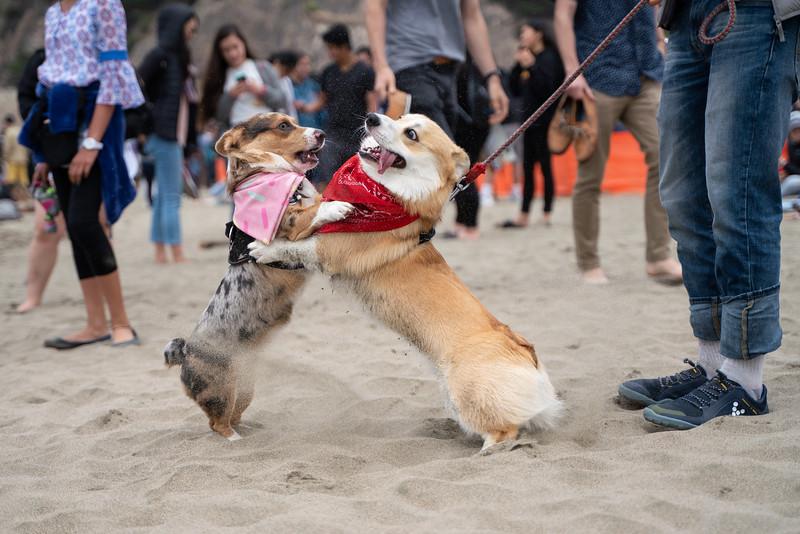 Dogs-181.jpg