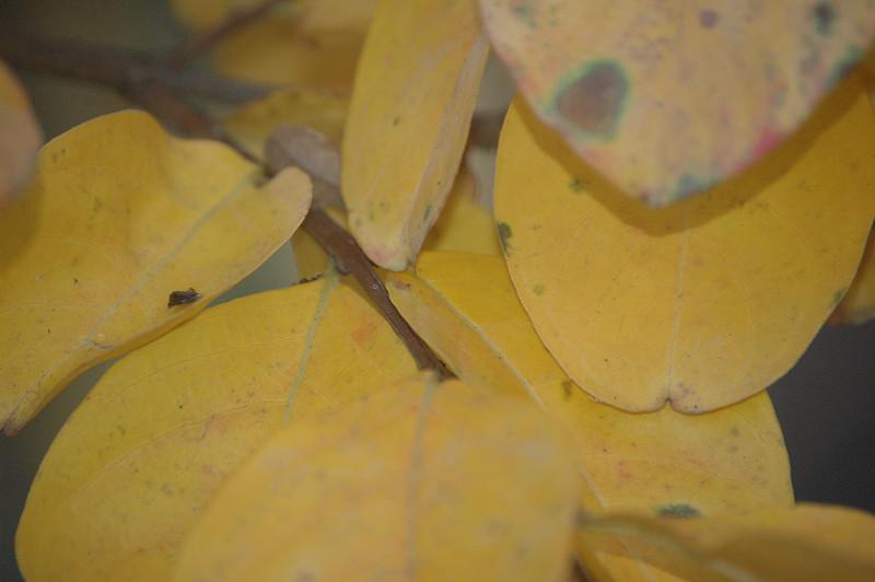 Fall Color 004.jpg
