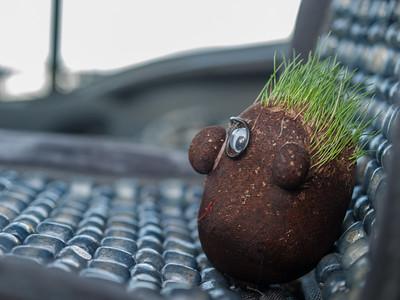 The secret life of Mr Grass Head