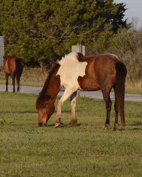 Horses 5 05_02.JPG