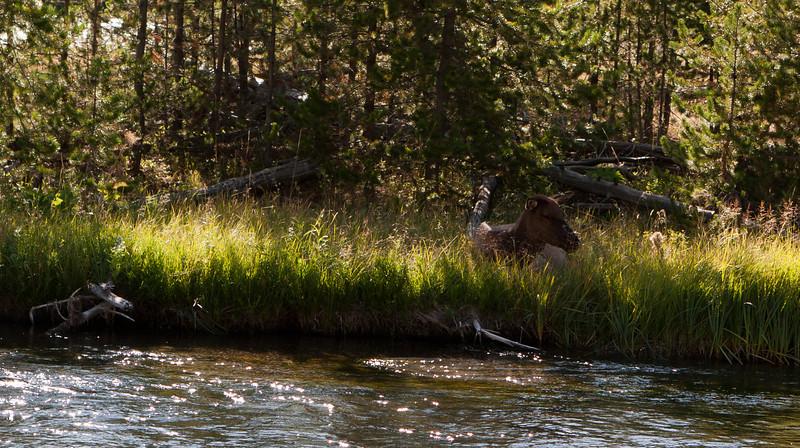 More elk.