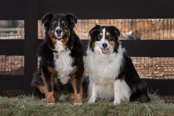 Julie Paul & Pups