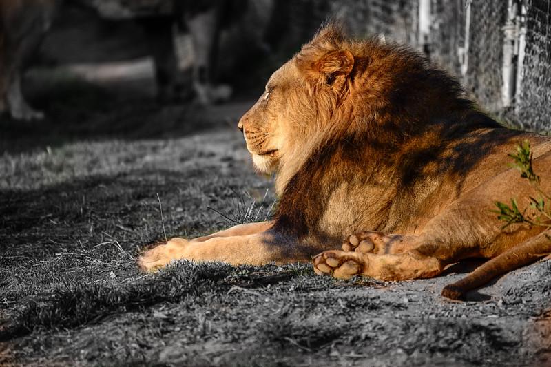Oakland Zoo-71289-20.jpg