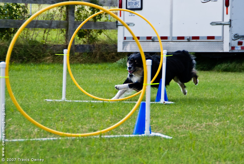 Tails Up Agility Club practice for NADAC