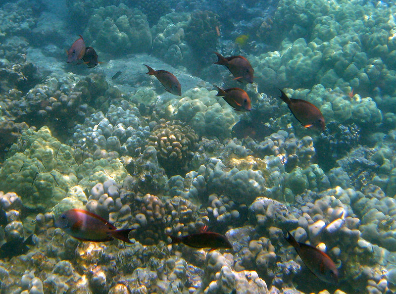 420- 20080416- Hawaii 20-Snorkelling IMG_0567.jpg