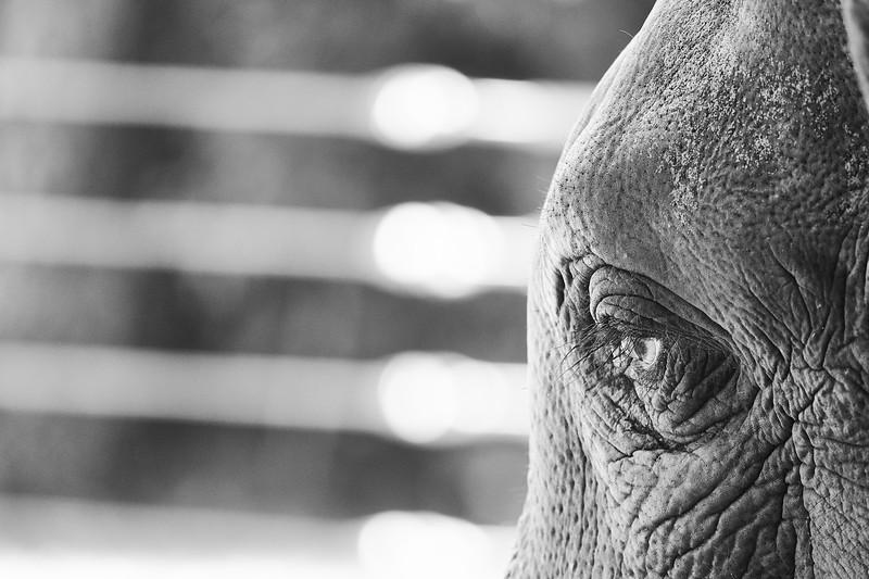20181030 - Houston Zoo-DSC_0854.jpg