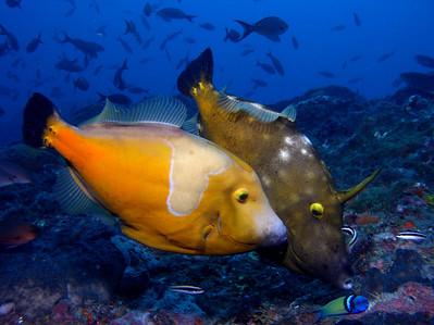 Stetson Bank Dive 2 - 7/4/08