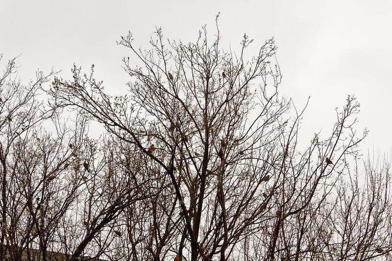 Backyard_Birds-08.jpg