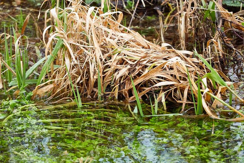 Water Medow-3603.jpg