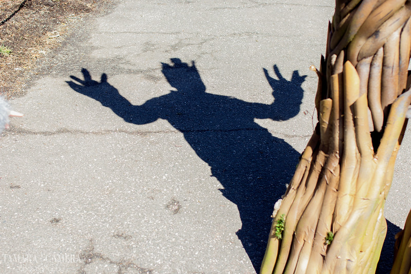 Shadows-4.jpg