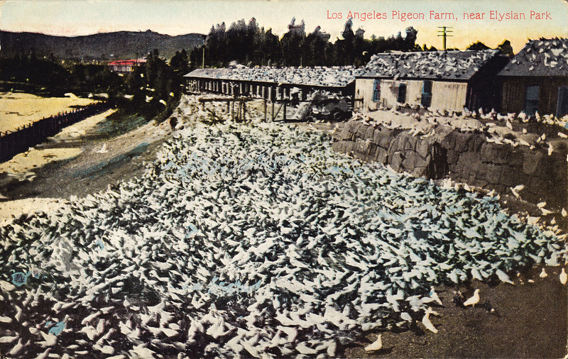 los-angeles-pigeon-farm.jpg