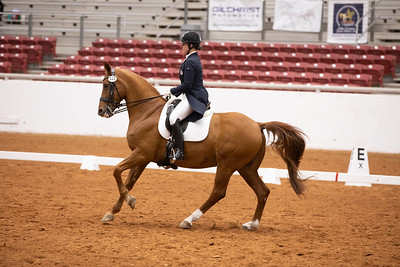 Horse 123