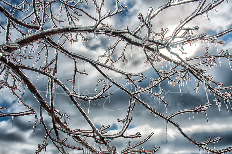 Ice branches.jpg