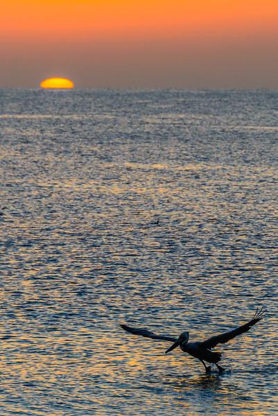Baja Sea Kayak_3_17 (791 of 1022).jpg