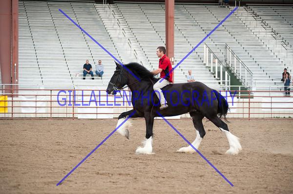 COLORADO DRAFT HORSE CLASSIC August 4&5 2014