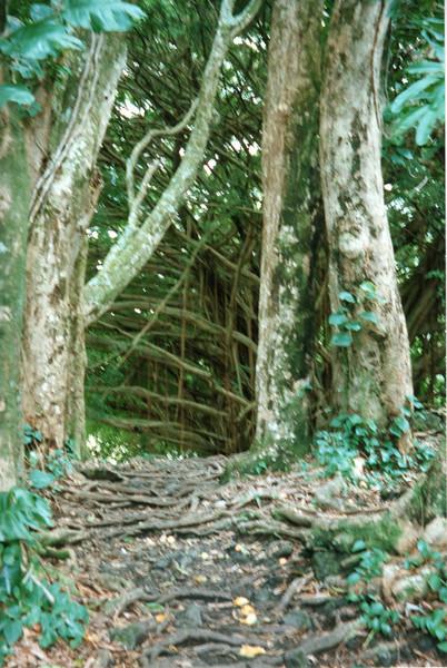199806-hawaii-10247.jpg