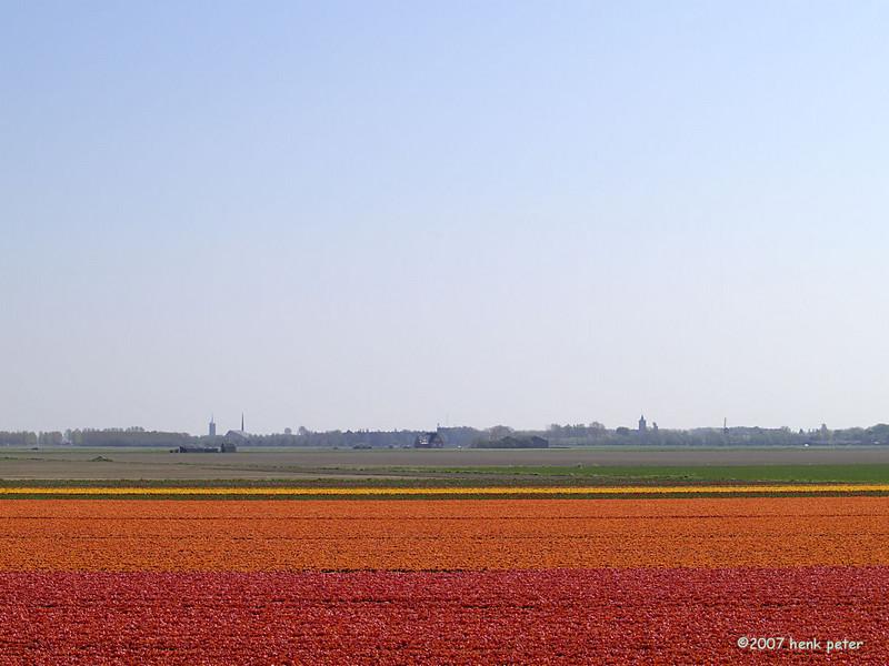Henk Peter Tulip Fields