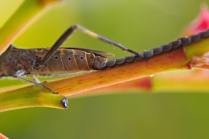 Bug-laying-eggs-01.jpg