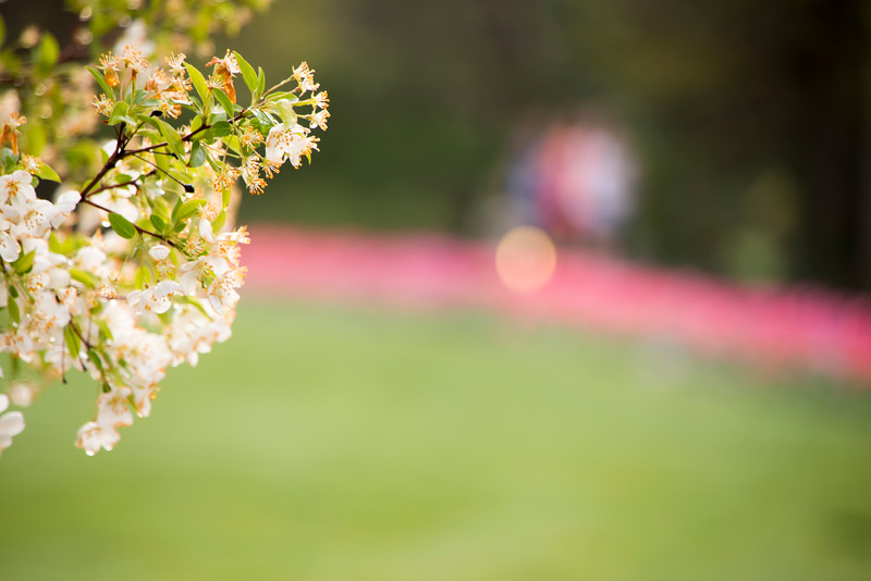 TulipFestHalfMarathon_Runners_Gardens_2015_IMG_4510.jpg
