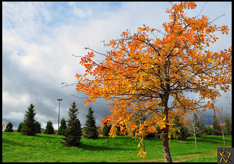 Target Pond Tree.jpg