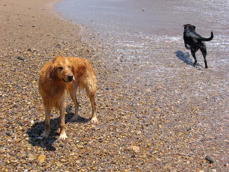 dogs-79.jpg