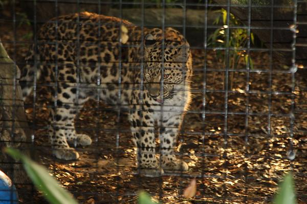 FCR Zoo Social - 5-12-15