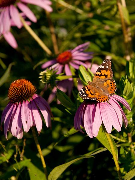 clip-015-butterfly-wdsm-12jul10-cvr-5971.jpg