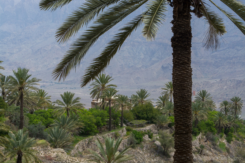 Oman Batinah-0144.jpg