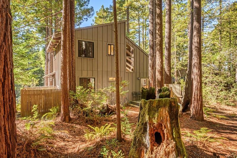 Set Among the Redwoods