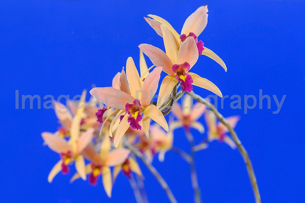 Orchid Flowers - Japan Grand Prix 2019