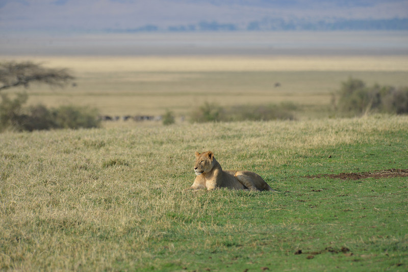 East Africa Safari 405.jpg