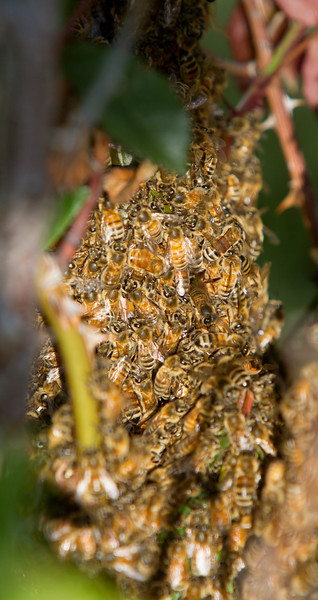swarm_052214_041.jpg