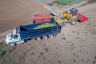Malpass Corn 10-18