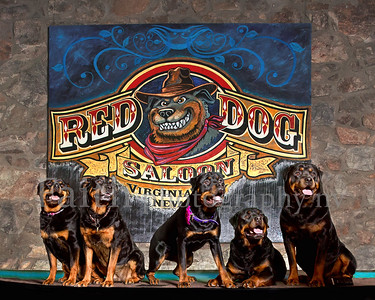 Red Dog Saloon Rotties