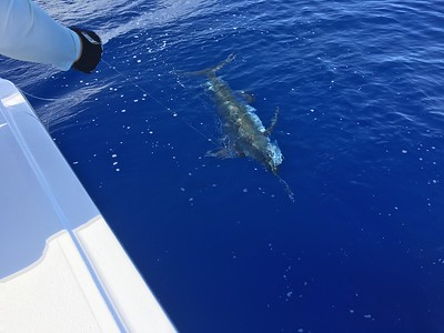 ORC Cuba Hatteras Fishing