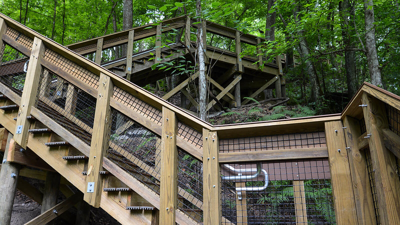 Steep stairs in the woods