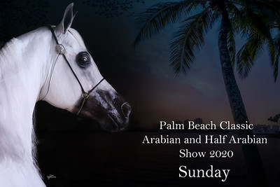 Palm Beach Classic Arabian Sunday