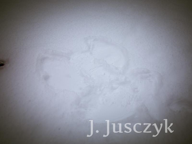 Jusczyk2020-1627.jpg
