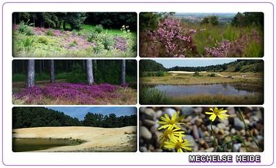 Landscape & scenery