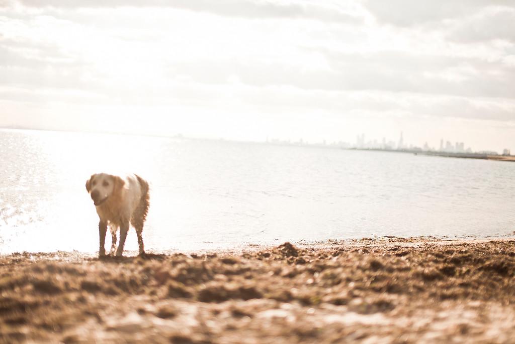 Dogsonbeach-AlexanderGardner-0001-20100614